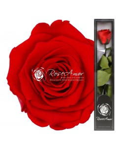 Trandafir Criogenat Tija Rosu Aprins 30cmOra03