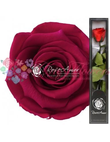 Trandafir Criogenat Tija Ciclam Deschis 30cmPin03
