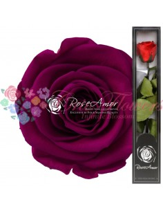 Trandafir Criogenat Tija Ciclam 30cmPin05