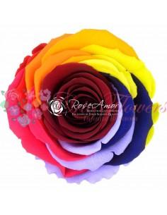 XL Rainbow Pin02