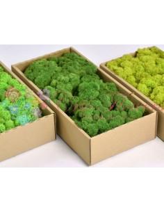 Licheni Verde-500gr