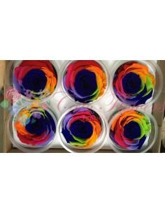 XL Rainbow Blu03