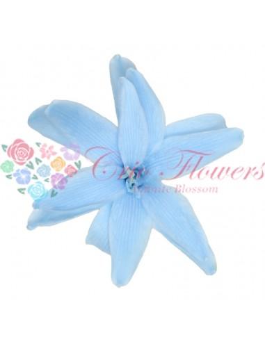 Zambila bleu (Nardo light blue)