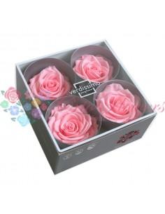 Rosa Premium Light Pink