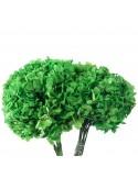 Hydrangea Green (Hortensie)