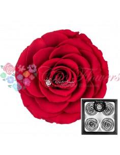 Trandafiri Criogenati Rosu Deschis BellaRed02