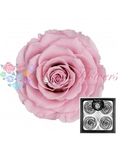 Trandafiri Criogenati Roz Pal BellaPin04