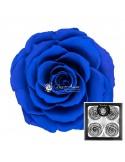 Trandafiri Criogenati Albastru BellaBlu03