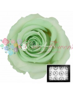 Miniroze Criogenate Verde Pal WarGre04