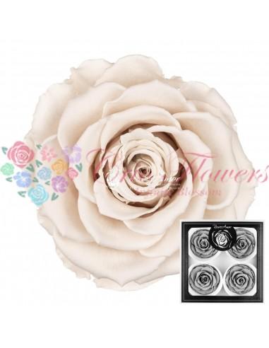 Trandafiri Criogenati Alb BellaWhi04
