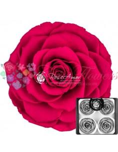 Trandafiri Criogenati Ciclam BellaPin05