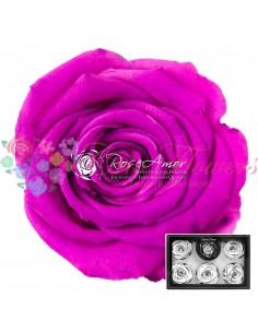 Trandafiri Criogenati Roz Fucsia XLPin07