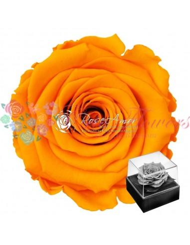 Giftbox Gb3 Yel04