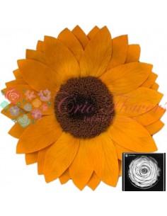Sunflower XXL Yel04