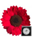 Sunflower XXL Red02