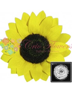 Sunflower XXL Yel02