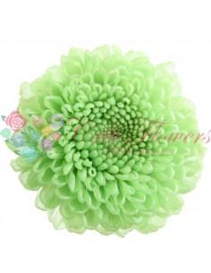 Fr - Chrysanthemum Focus Mint Green