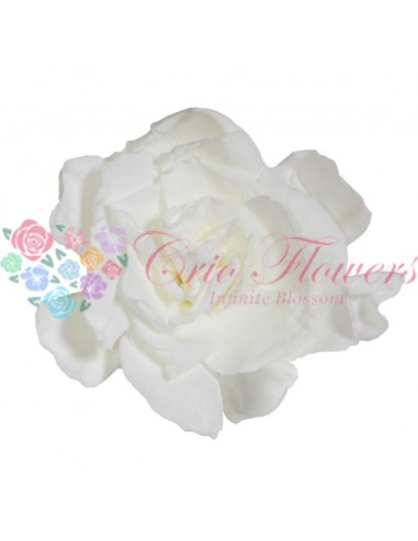 Gardenia White