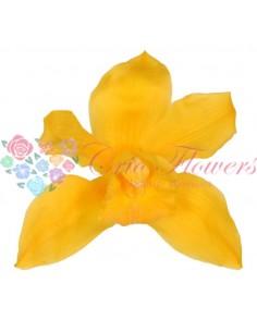 Orhidee Galben(Cymbidium Warm Yellow)