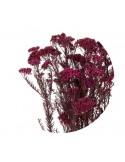 Floare de Orez Stabilizata Rosu