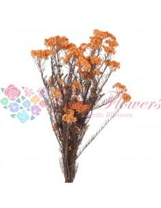 Floare de Orez Stabilizata Galben