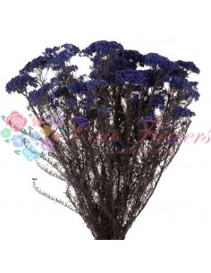 Floare de Orez Stabilizata Albastra