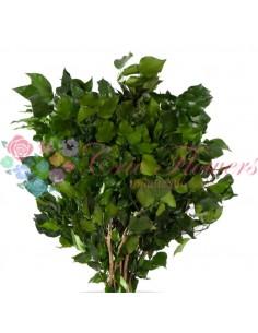 Iedera Stabilizata Criogenata cu Fructe Verde