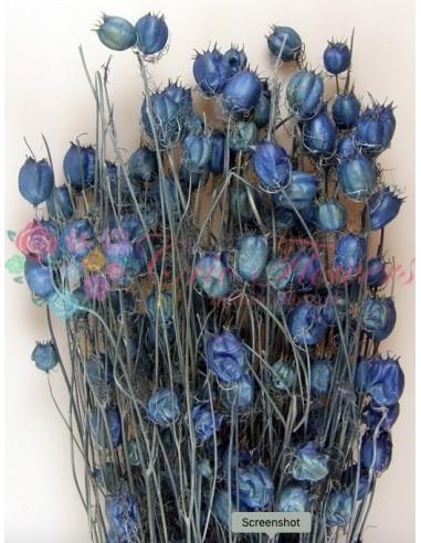Nigella Albastru