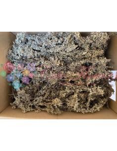 Crengute cu Licheni Natur
