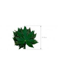 Feriga Plume 40cm