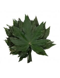 Frunza de Aralia Stabilizata Criogenata Verde