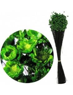 Glixia Verde Inchis