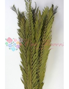 Frunze Palmier Verde Olive