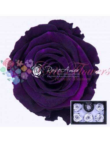 Trandafiri Criogenati Mov Indigo XLPur01