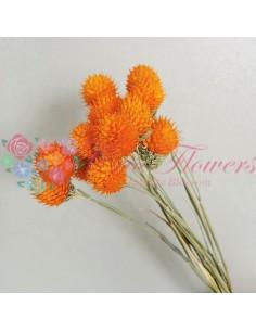 Globe Amaranthus Uscat Portocaliu