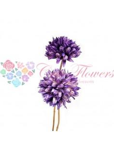 Floare Magnolie Uscata Mov