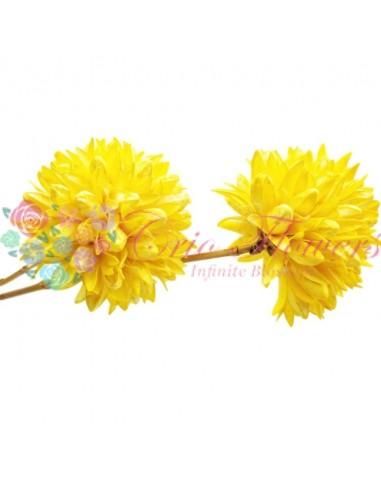 Floare Magnolie Uscata Galben