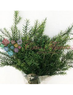 Crenguta Arbore Ceai Criogenata Verde