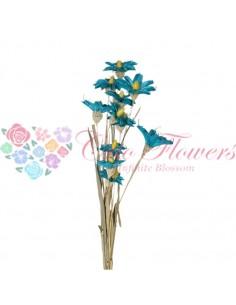 Orhidee Uscata Turquoise