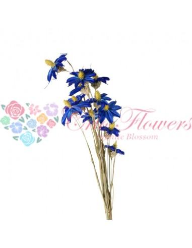 Orhidee Uscata Albastru