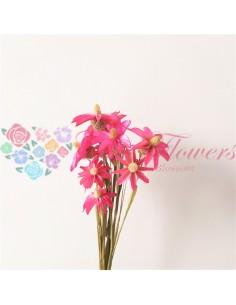 Orhidee Uscata Roz