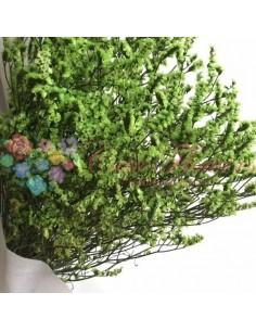 Limonium Criogenat Verde