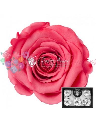 Trandafiri Criogenati Corai XLBic09