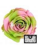 Trandafiri Criogenati Roz Verde XLBic26