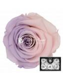 Trandafiri Criogenati Roz Lila XLBic27