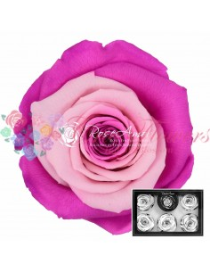 Trandafiri Criogenati Fucsia Roz XLBic29