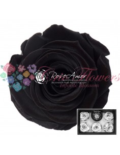 Trandafiri Criogenati Negru XLBla01