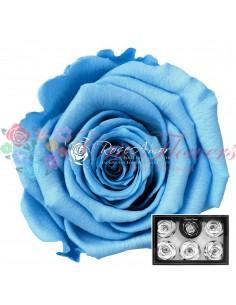 Trandafiri Criogenati Bleo XLBlu01