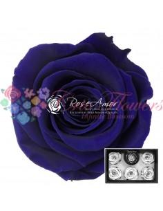 Trandafiri Criogenati Albastru XLBlu03