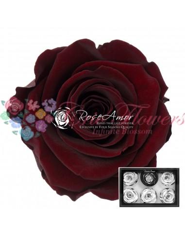 Trandafiri Criogenati Rosu Ciocolatiu XLCho01
